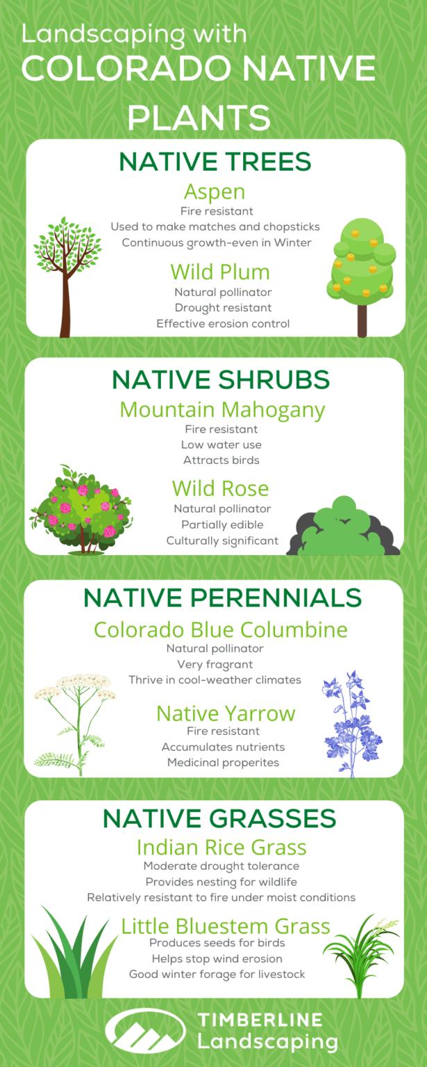 native plants infographic