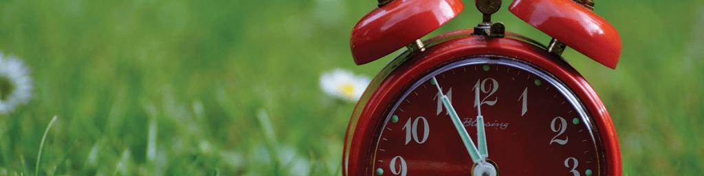 landscaping timeline