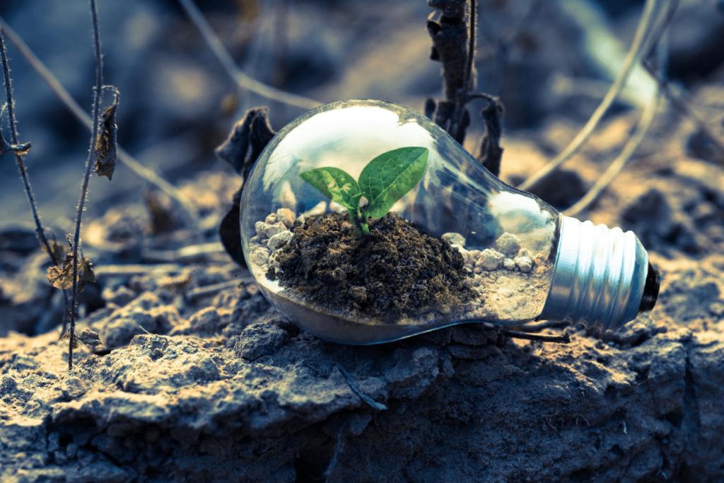 Seedling in lightbulb