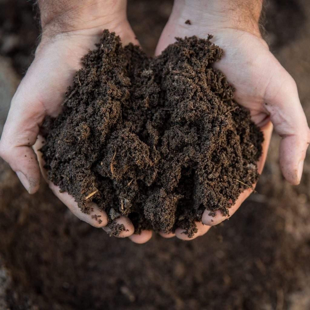 why soil pH matters