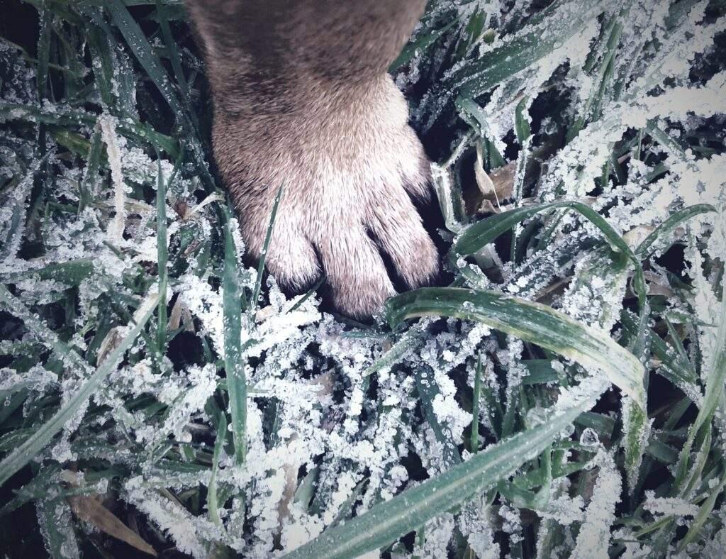 paw on frozen grass
