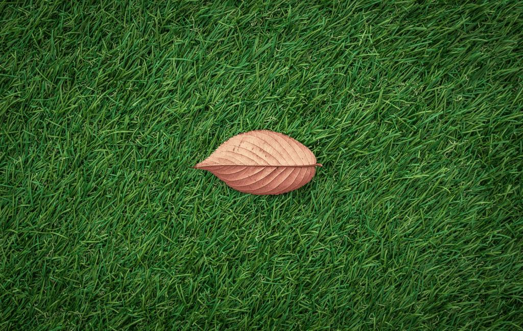 leaf on a lawn