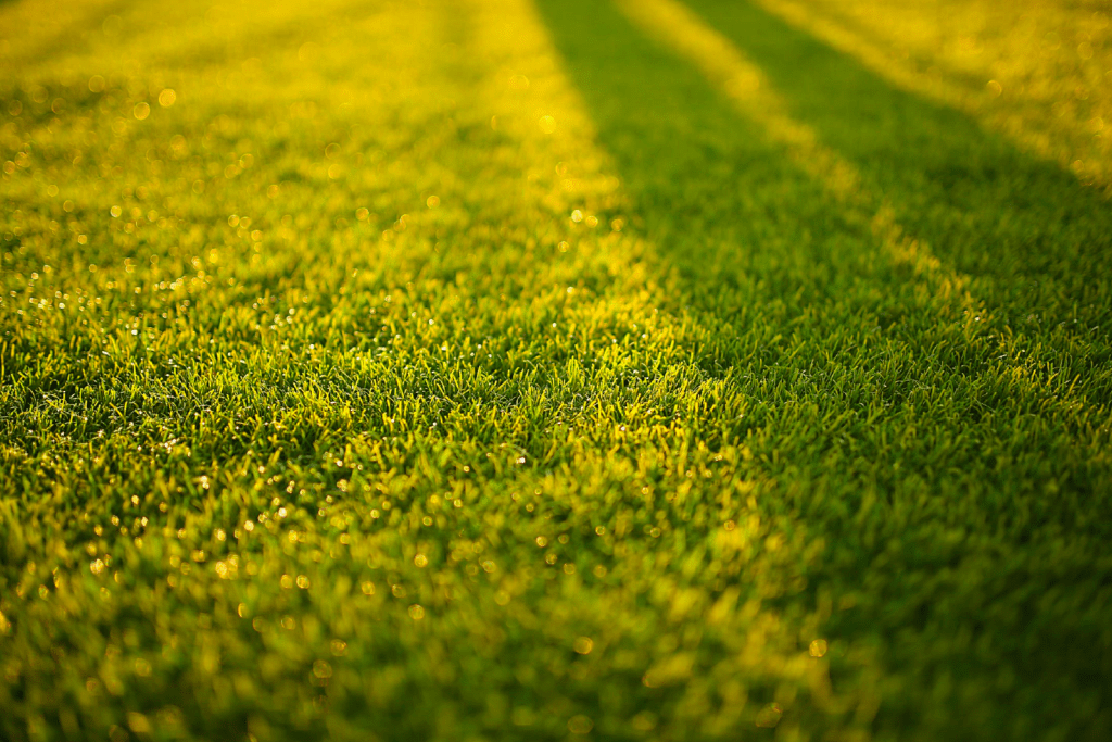 green lawn sunlight