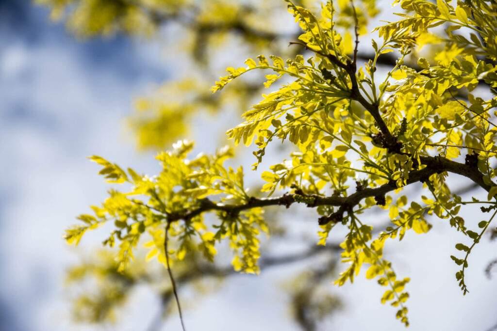 yellow tree branch