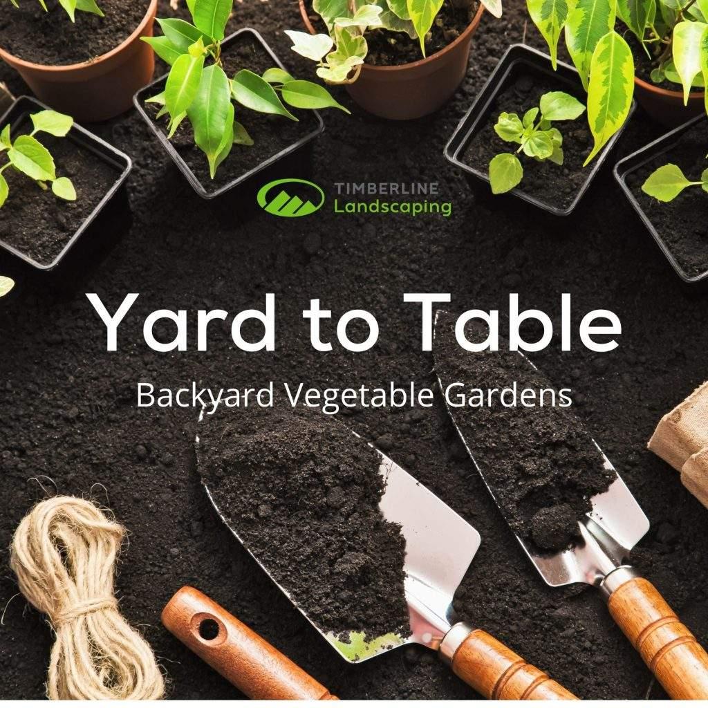 growing a backyard vegetable garden
