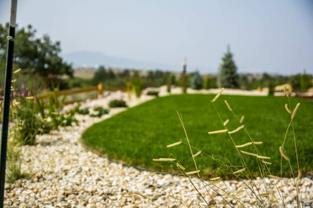 xeriscaped lawn with decorative grass