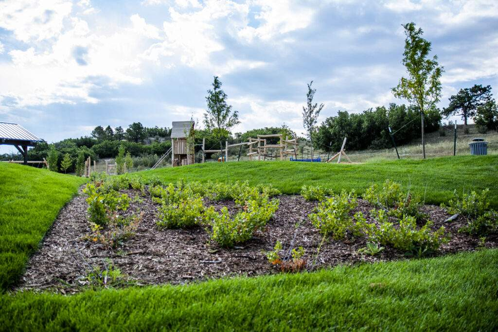 Wald Rumpus park with new plants and turf