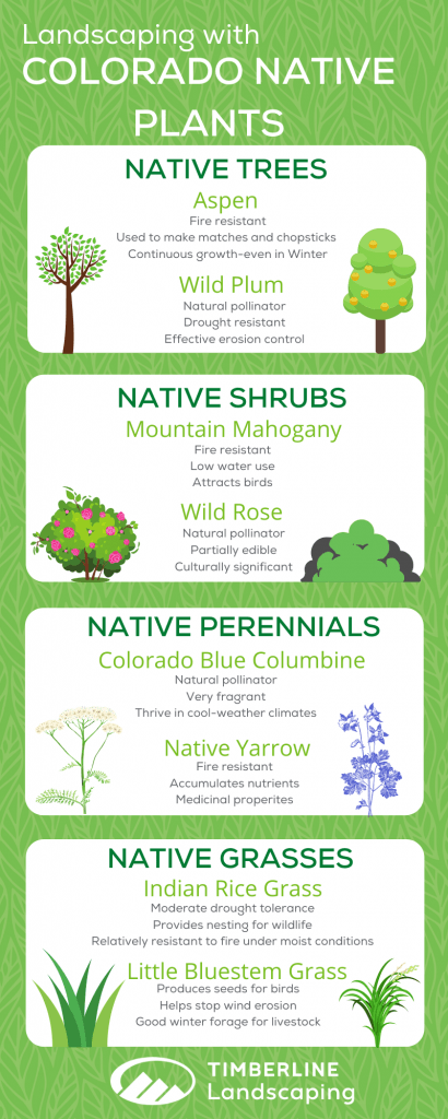 landscaping with colorado native plants infographic