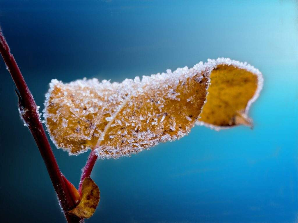 frosted leaf on background of blue