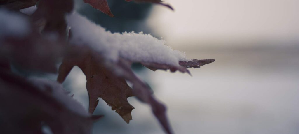 snow on leaf