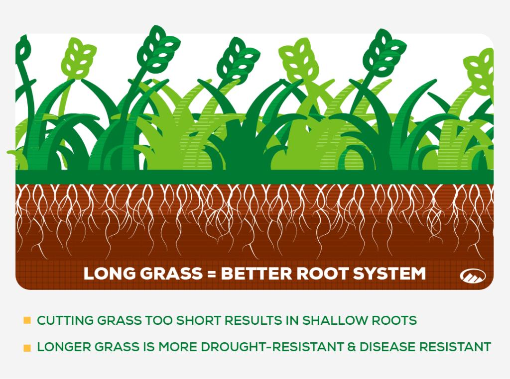 longer grass infographic