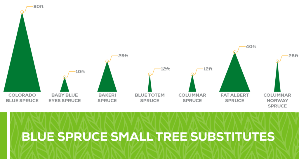 blue spruce small tree substitutes