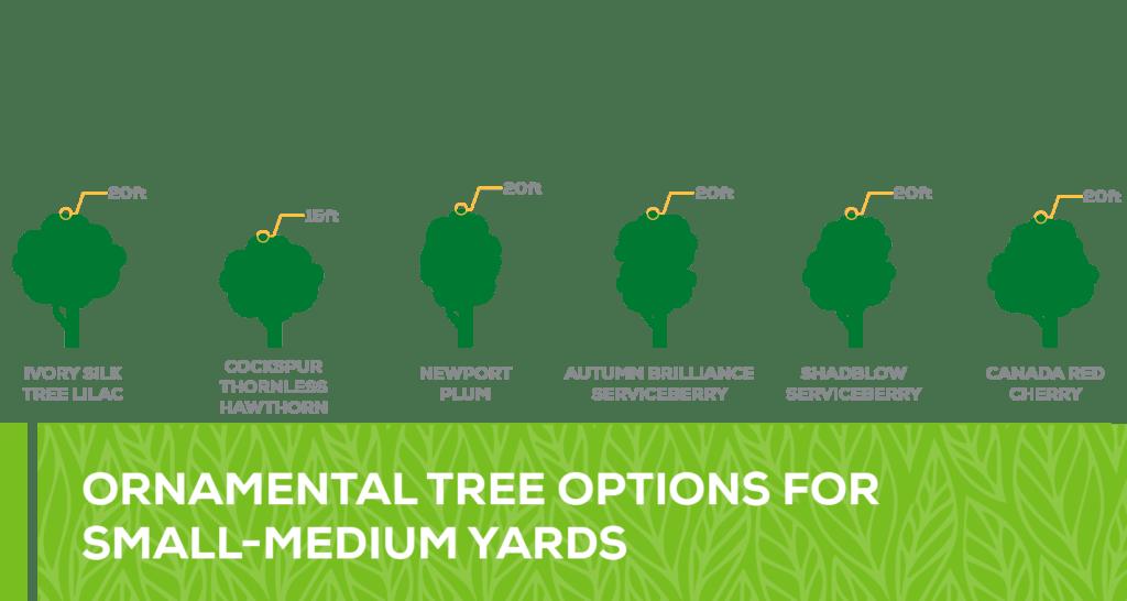ornamental tree options for small - medium yards