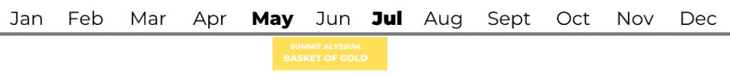 Summit Alyssum (basket of gold)
