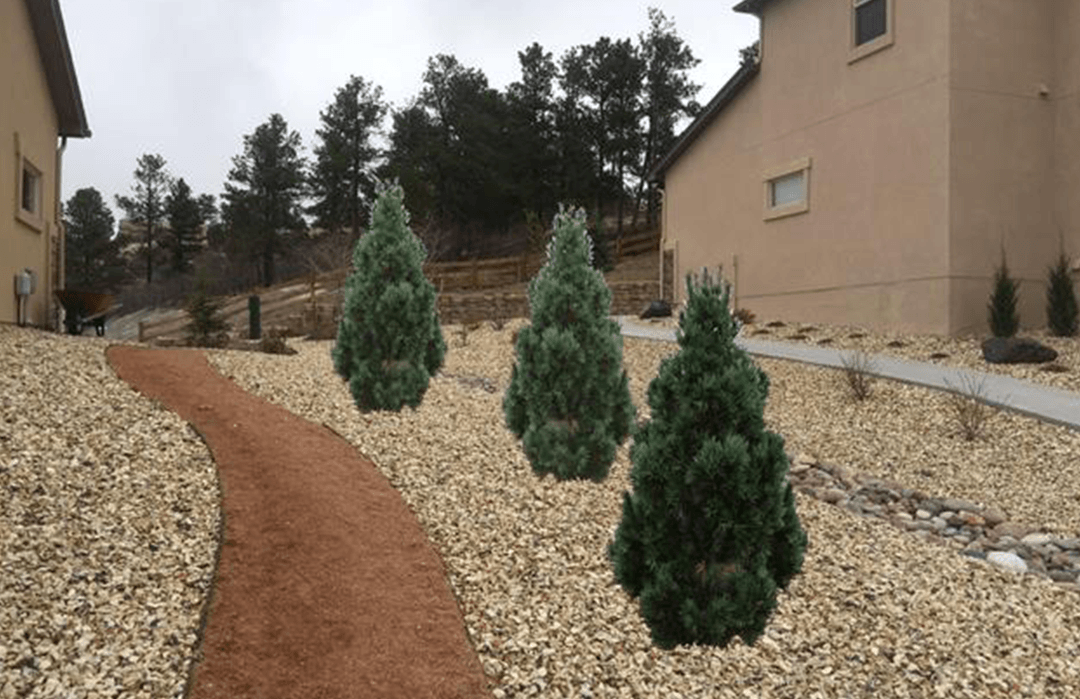 Choosing The Right Size Tree For Your Colorado Springs Landscape Timberline Landscaping