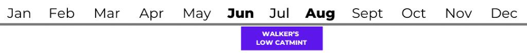 Walker's Low Catmint