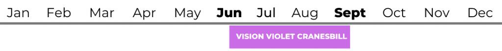 Vision Violet Cranesbill