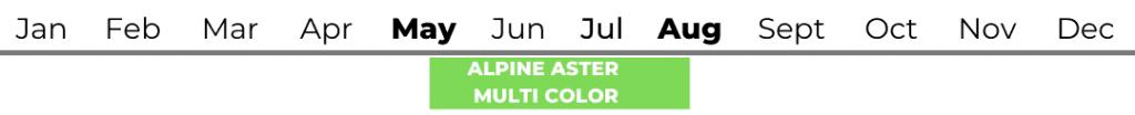 Alpine Aster (Blue Alpine Daisy)