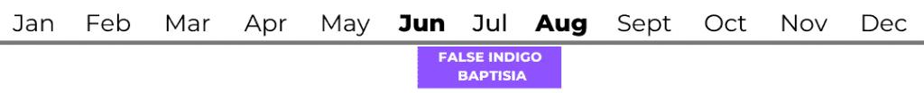 False Indigo (Baptisia)