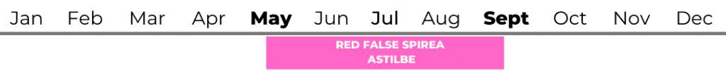 Red False Spirea (Astilbe)
