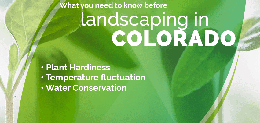 3 things you need to know before landscaping in colorado