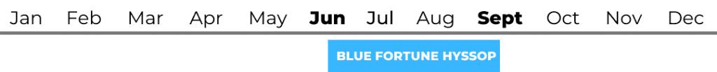 Blue Fortune Hyssop