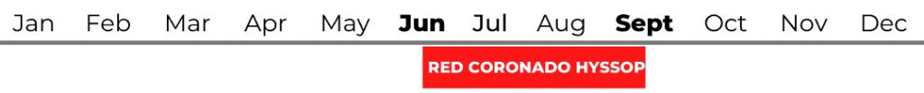 Red Coronado Hyssop