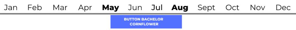 Button Bachelor (Cornflower)
