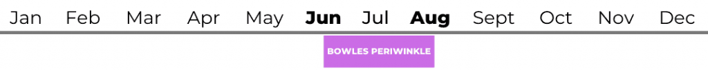 Bowles Periwinkle