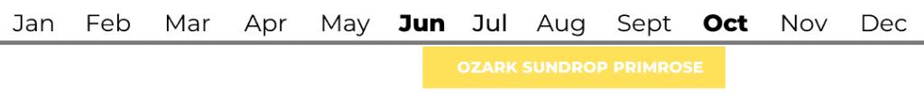 Ozark Sundrop Primrose