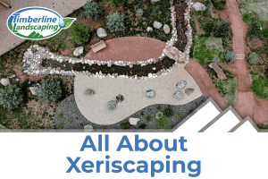 All About Xeriscaping image