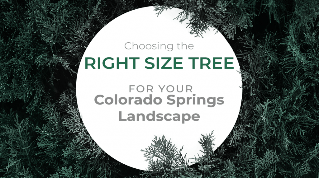 Choosing the Right Size Tree for Your Colorado Springs Landscape
