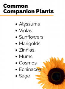 Common Companion Plants