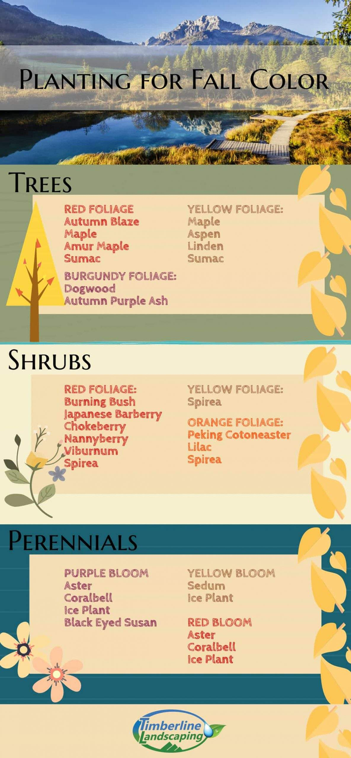 Planting For Fall Color Infographic