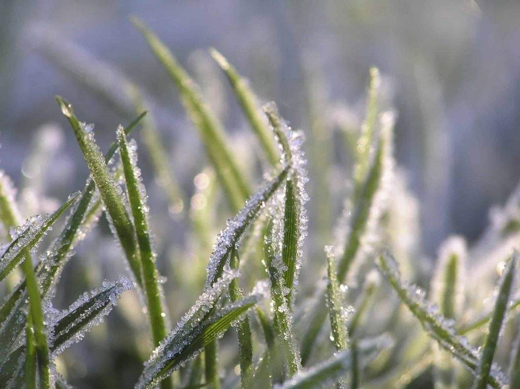 The Importance of Winter Watering