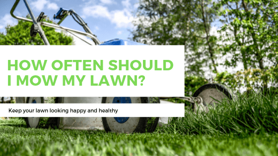 How often should I Mow My Lawn Lawnmower