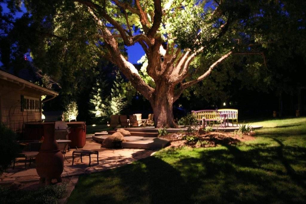 Lit Tree at Night