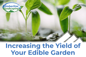 Increasing the Yield of Your Edible Garden image