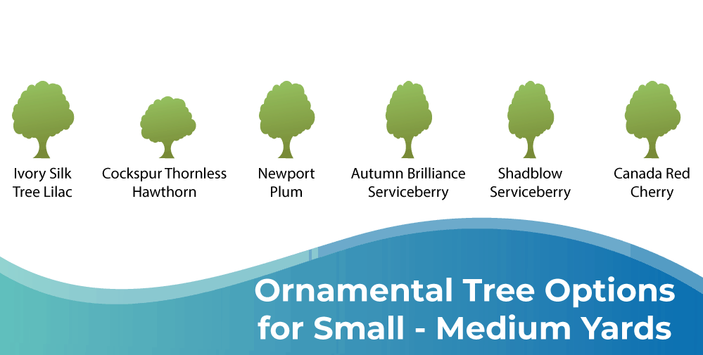 Ornamental Tree Options for Small to Medium Yards