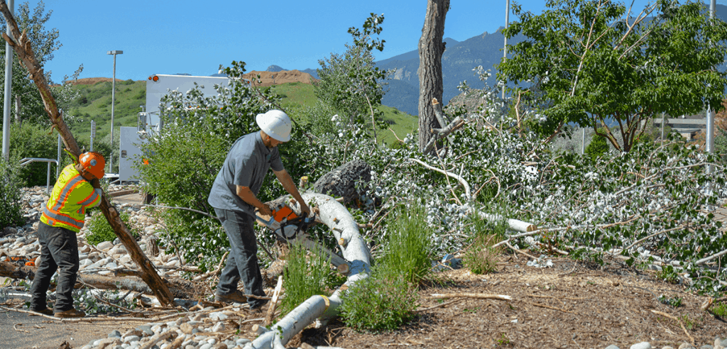 Proper Pruning Provides Preventative Care for Trees