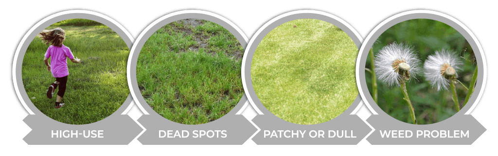 Signs That it is Time to Overseed Your Colorado Lawn