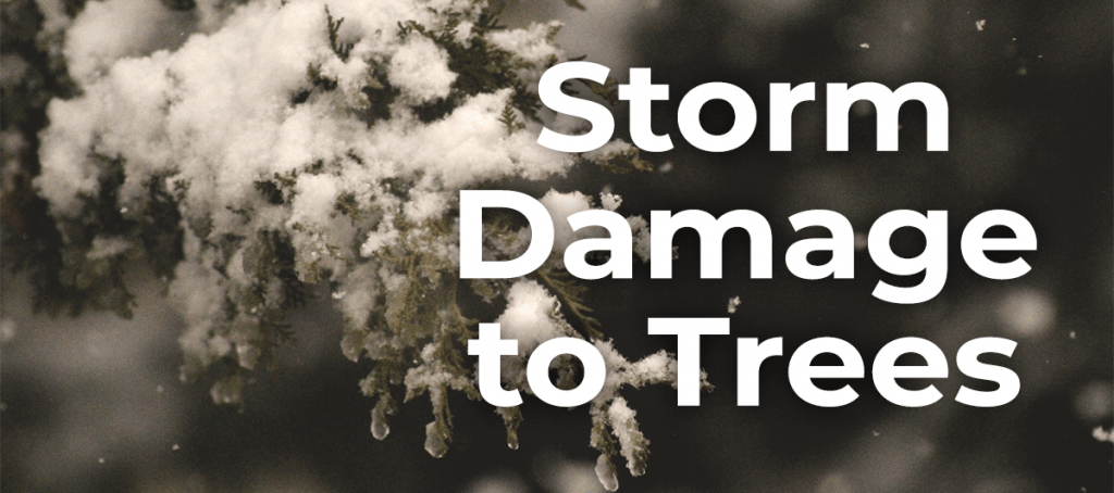 Storm Damage to Trees_ Common Problems and Solutions