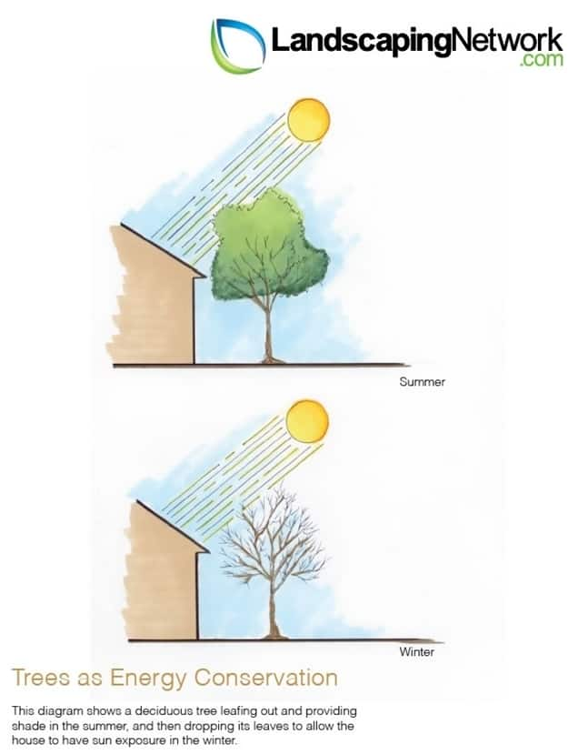 Tree as Energy Conservation