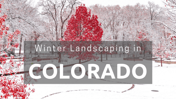 Can I Landscape in Winter in Colorado?