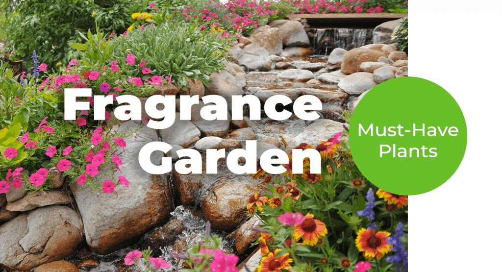 Your Colorado Fragrance Garden Guide_ Must-Have Plants