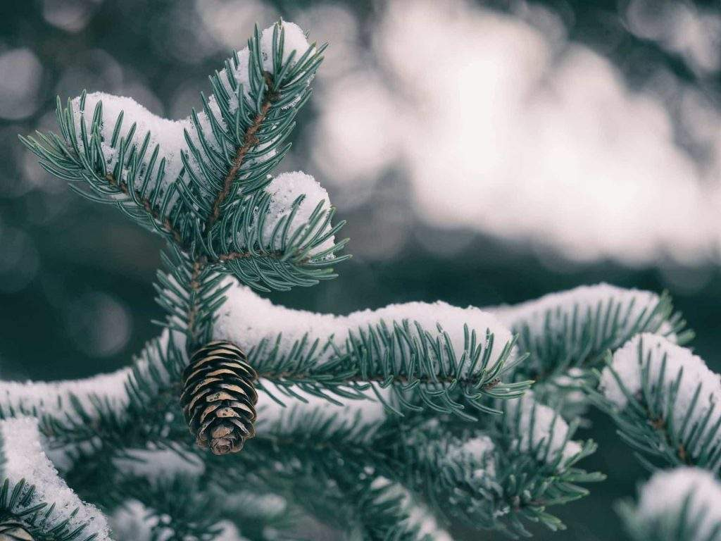 Preparing Your Yard For Winter