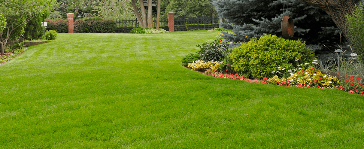 Beautiful Lawn With No Weeds Timberline Landscaping