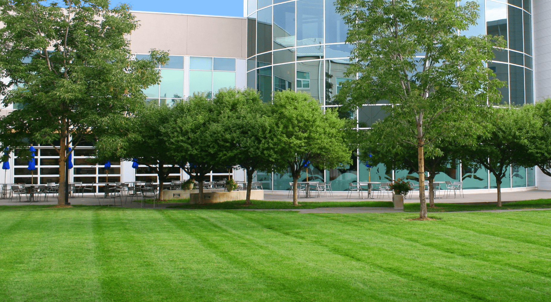 tree and shrub care image of commercial landscape