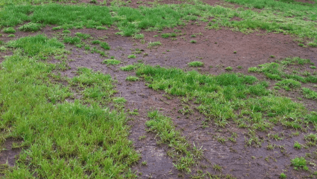 grass in poor condition