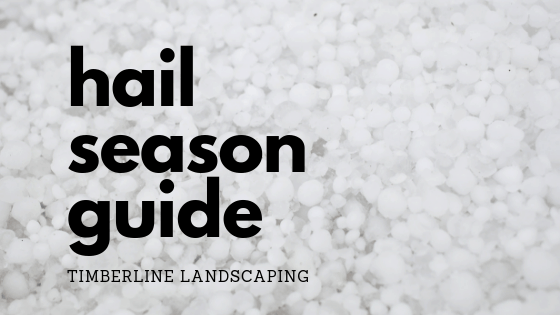 hail season guide by Timberline Landscaping for Colorado